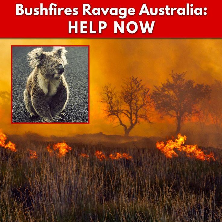 Bushfires Ravage Australia Help Now The Animal Rescue