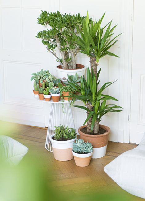 Create a green haven by displaying your Yucca with cacti and succulents