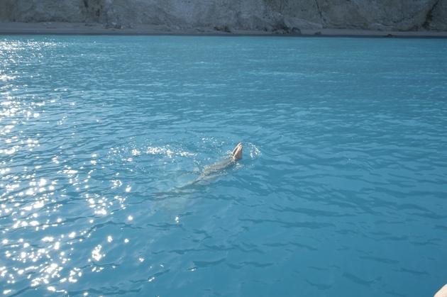 Porto Katsiki coastal swim...exploration underwater!