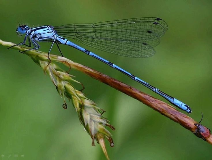 Cuatro Ciénagas un sitio rico en libélulas | Boletín BoCES
