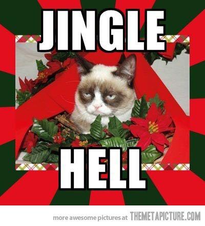 d5fe120a2c72975b75a3f4d3c2d6d124 grumpy cat quotes grumpy cat meme 465 best grumpy cat & pokey images on pinterest funny animal