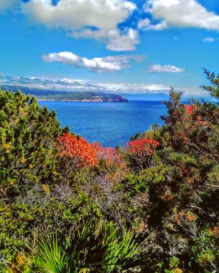 Cornici colorate nel paradiso. . . . #portoconte #alghero #beach #sea #blue #colors #nature #landscape #seascape #water #sky #clouds #sun #focusardegna #lanuovasardegna #sardinialand #sardegnamare_social #igersassari #igersardegna #yallerssardegna #volgosardegna #sosbattormorossardegna #sardegna_reporter #sardegnarubata #photography #relax #walk #sardegna #sardinia #naturelovers http://tipsrazzi.com/ipost/1506077303191641648/?code=BTmqVPlBB4w