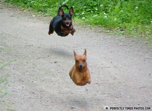 Best Perfectly Timed Pics Images On Pinterest Pictures Cool - Photographer proves dogs can fly with funny perfectly timed photos
