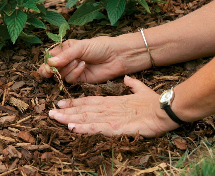 Keep weeds in check by learning effective methods of removing and preventing unwanted plants from showing up. http://www.finegardening.com/six-tips-effective-weed-control