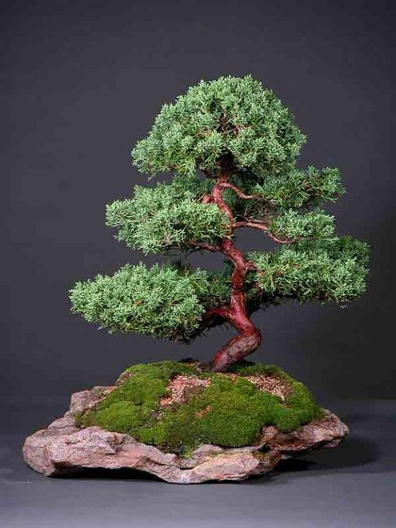 37 best green thumb indoors images on pinterest for Indoor gardening rainier oregon