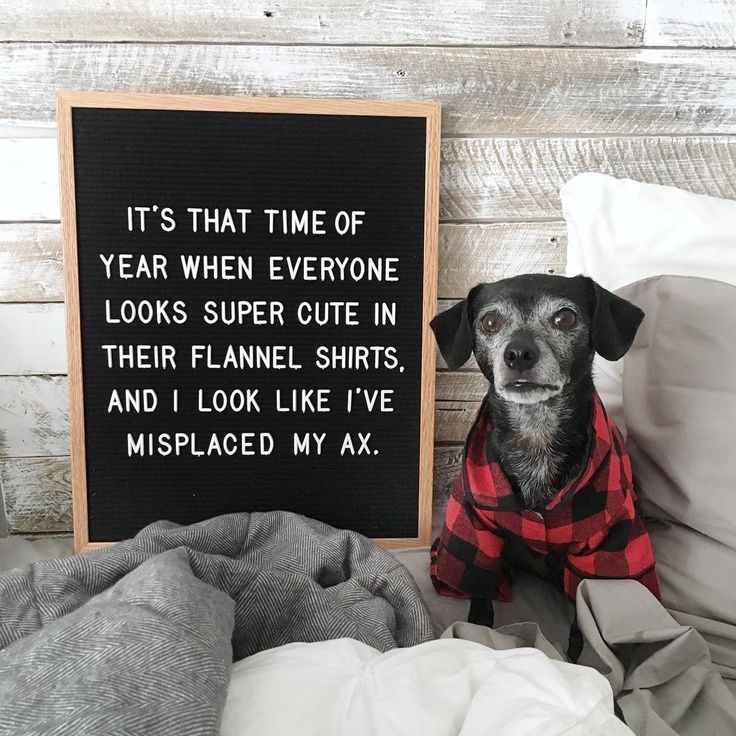 It's that time of year when everyone looks super cute in their flannel shirts, and I look like I've misplaced my ax. #fulcandles #letterfolk #letterboardquotes #funnyquotes #winter quotes funny