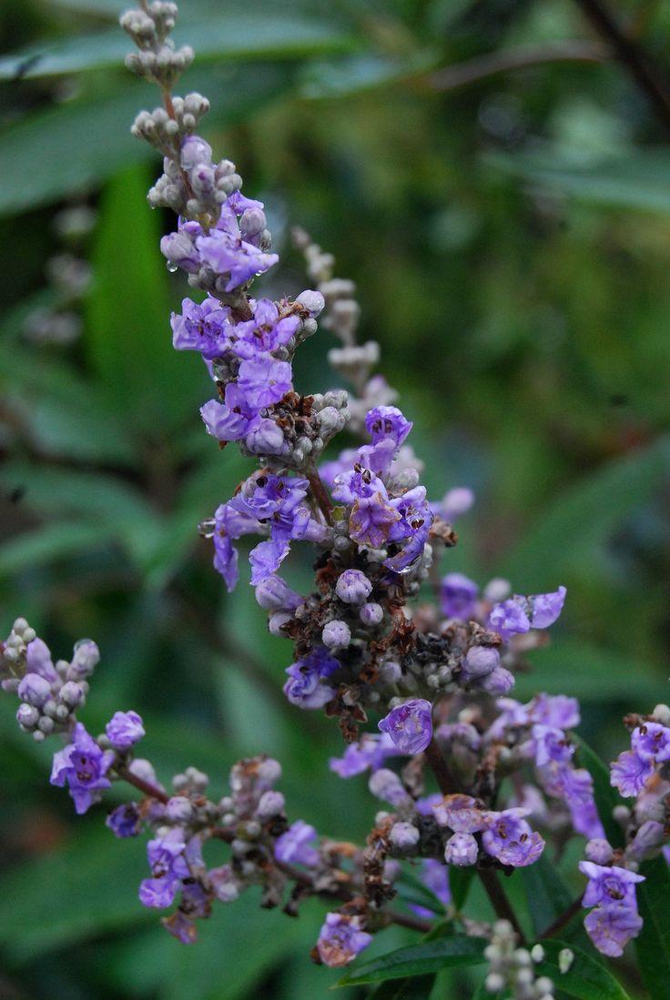 Pretty purple winter blooms