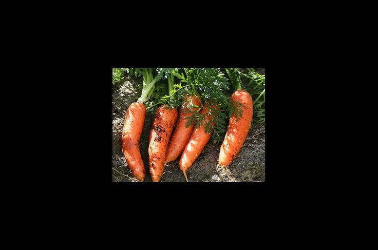 Κουνουπίδια, μπρόκολα, λάχανα, καρότα, αντίδια είναι είδη που μπορούμε να…