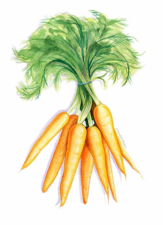 Carrots botany