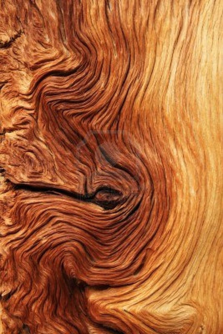 Movement in nature. Contorted brown and tan wood grain from alpine pine tree roots Stock Photo