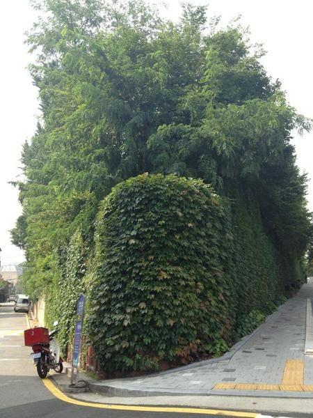 passionkeeper @passionkeeper / 제가 좋아하는 우리동네 골목길이에요. 지날때마다 왠지 기분이 좋아지는. / #골목 #골목길 #식물 / 2012 09 05 /