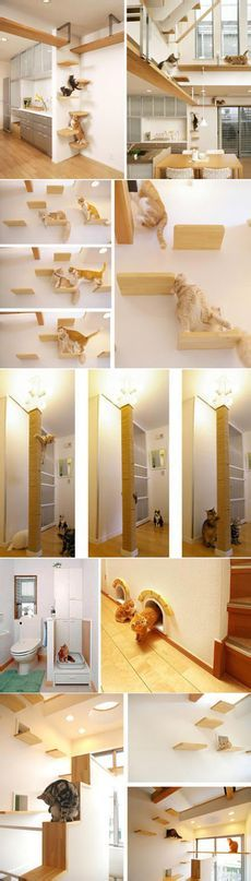 Designed to house pet cat, that the toilet is good there is love oh ~ ~ ~