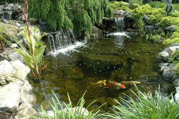17 best images about ponds designed and built by deck and for Koi pond temperature