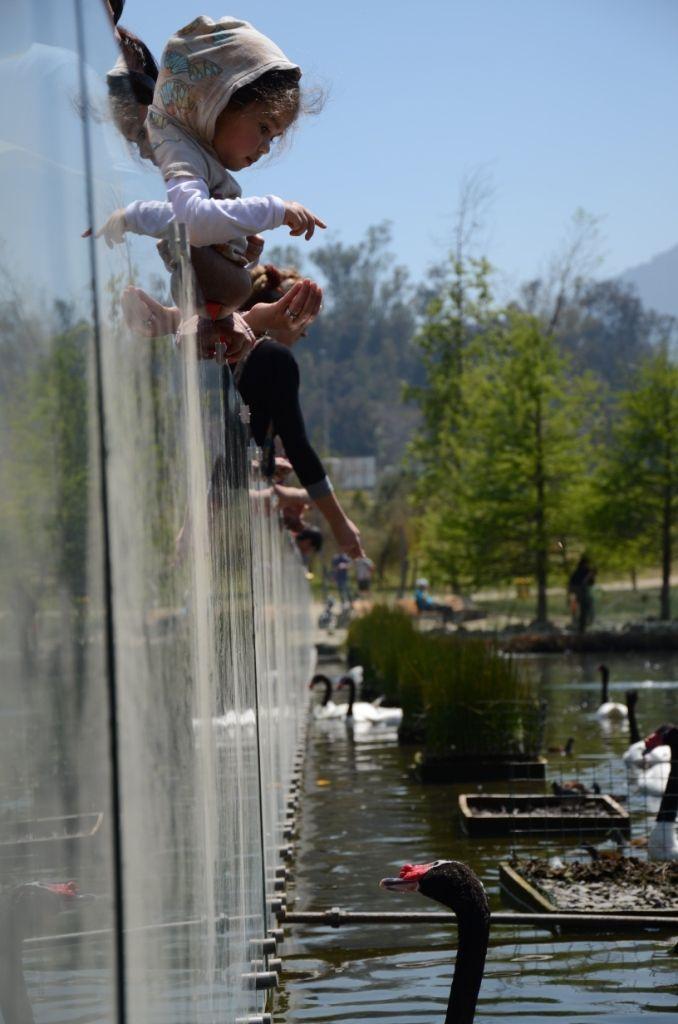 TC Swan Parque Bicentenario Santiago, Chile
