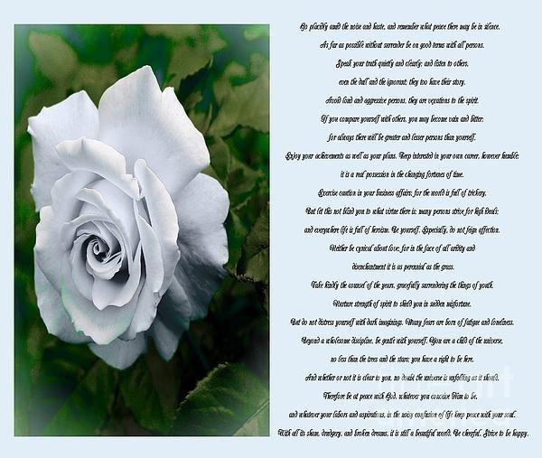 Desiderata White Rose Sidebyside by Barbara Griffin
