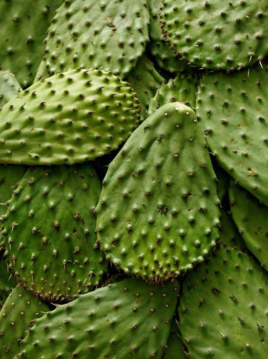 Green | Grün | Verde | Grøn | Groen | 緑 | Emerald | Colour | Texture | Style | Form | Pattern | Cactus / Jason Varney