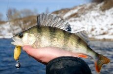 The Best Fishing Lures For Bass Fishing - http://bassfishingmaniacs.com/the-best-fishing-lures-for-bass-fishing/