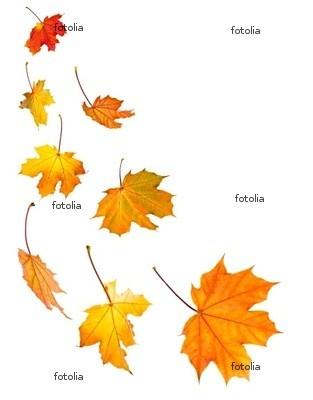 Falling leaves- tattoo idea