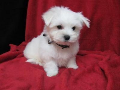 small cuddly dog Dream Board Pinterest Catherine o