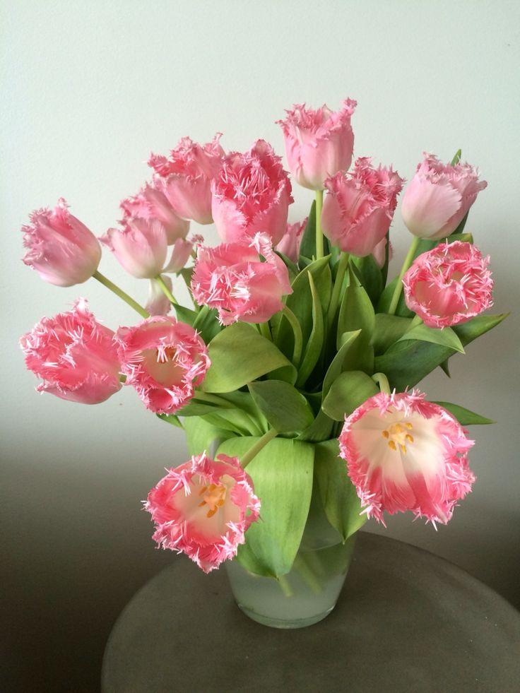 """Interiør-tulipaner """"Galerie"""""""