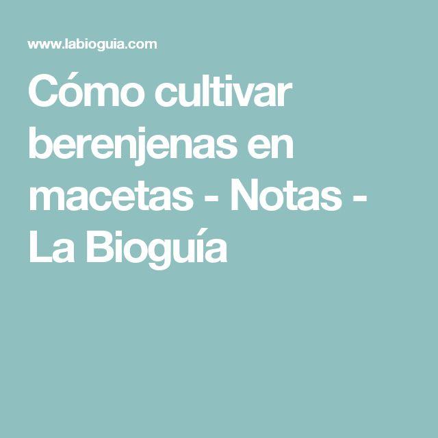 Cómo cultivar berenjenas en macetas - Notas - La Bioguía