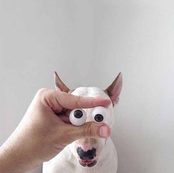 dog-art-14