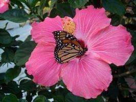 cómo diseñar un jardín de mariposas en el patio trasero