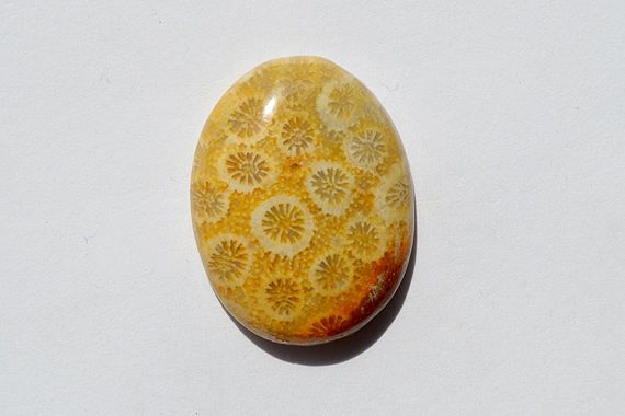 20 Cts Natural Fossil Coral Gemstone Cabochon Awesome Designer Oval Fossil coral Loose Cabochon 25x19x5 MM R06708 by JAIPURARTMART on Etsy