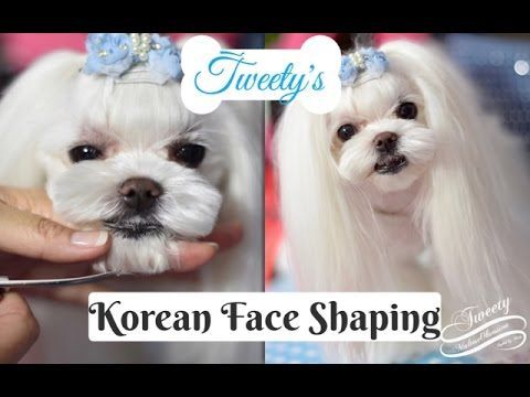 KOREAN GROOMING: Tweety's Korean Face Trimming ~ Korean Cut ~ How to Trim Maltese Face 말티즈미용 - YouTube