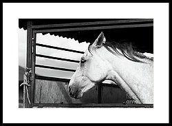 Black And White World Framed Print by Svetlana Svetlanistaya  #Svetlanistaya #Horse #BlackAndWhite #FramedPrint #InteriorDesign #HomeDecor