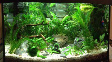 aquarium combattant | Première plantation pour un 60l des idées mais sont-elles bonnes ...