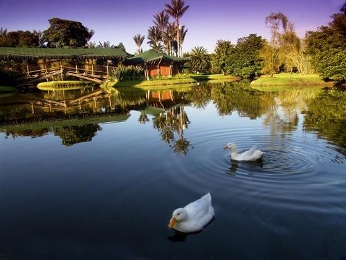 Jardín Botánico -Bogotá. #Colombia #SoyColombiano