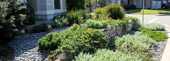 186 Best Images About California Native Gardens On