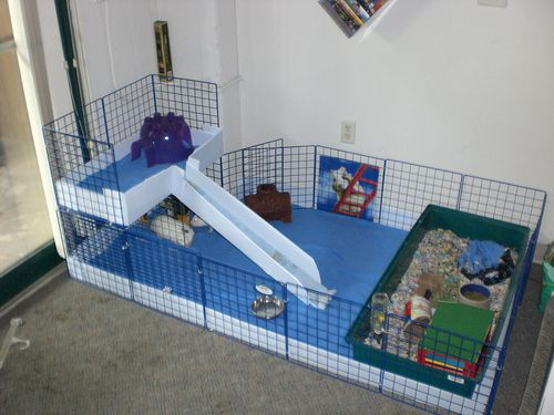 433 best images about my guinea pig on pinterest cavy for Simple guinea pig cage
