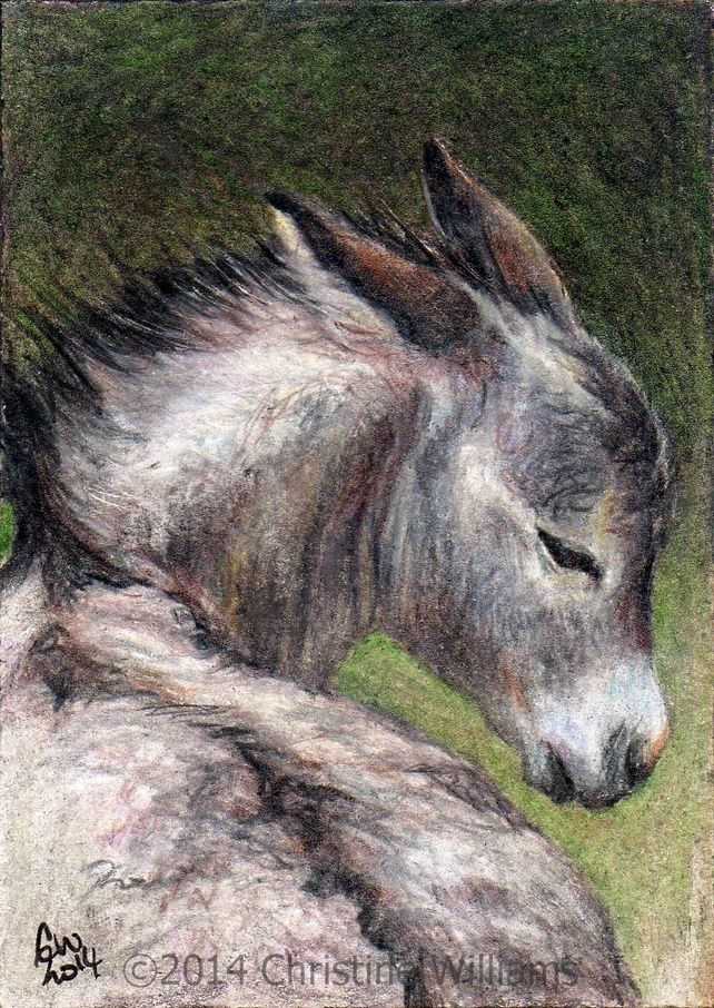 Little Donkey foal - ACEO ATC print from original animal SFA pencil sketch £3.00