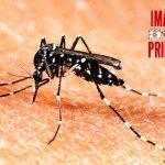 Dengue: Confirman que son 224 los casos positivos de dengue en la provincia