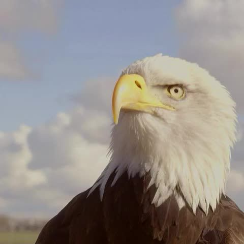 """Watch BBC News (World)'s Vine, """"Watch an eagle that goes after troublesome drones as if they were its prey. bbc.in/droneprey #Drones #BBCClick"""""""