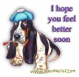 funny get well soon images | Funny Get Well Soon Animal Pictures