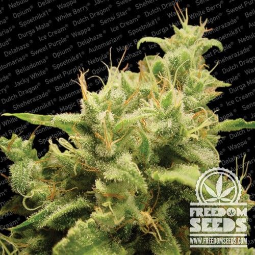 Paradise Seeds - Opium - Fem Seeds