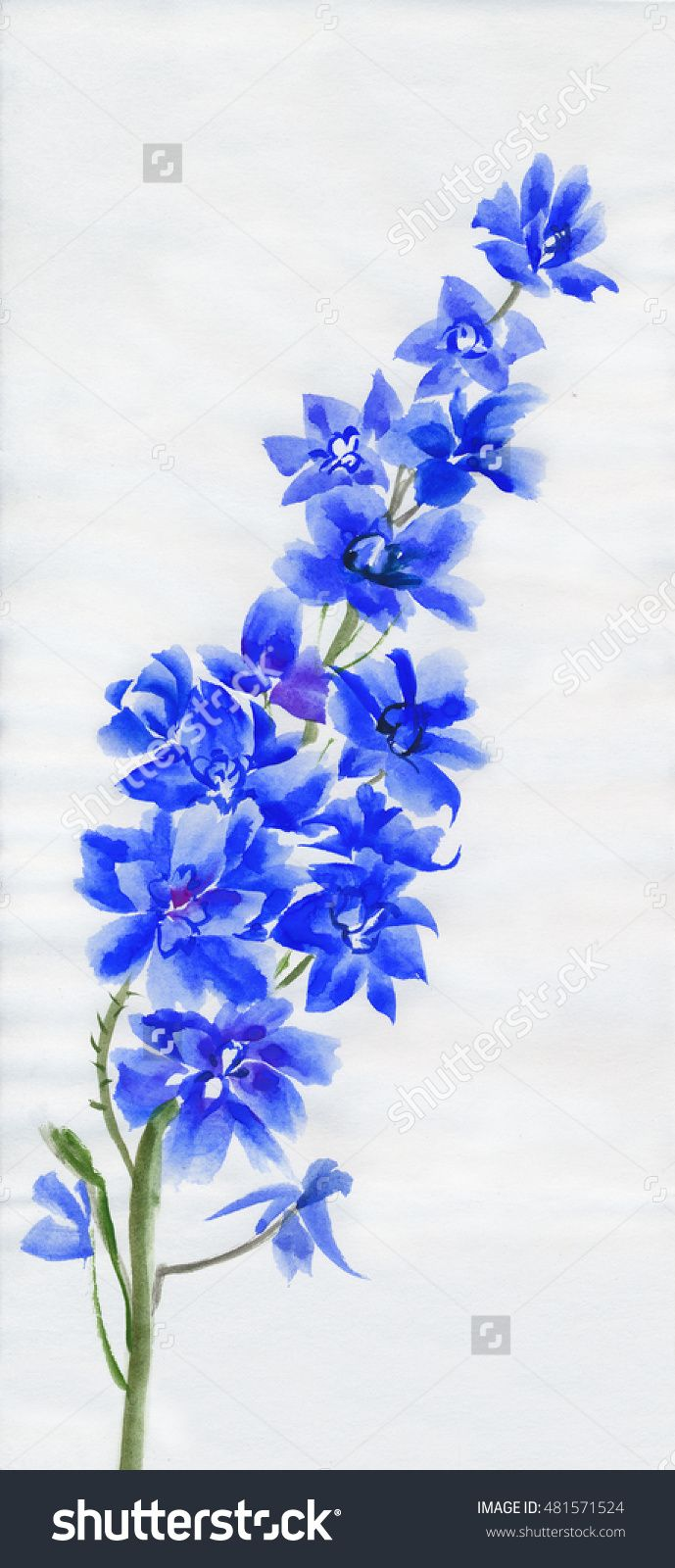 Delphinium Branch Isolated On White Original Watercolor Painting Stock Photo…