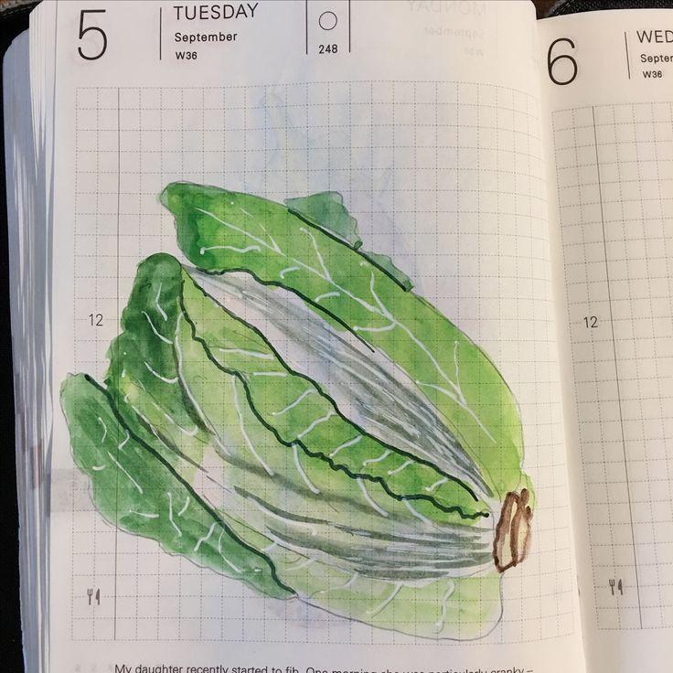 Lettuce My drawings, Drawings, Fancy
