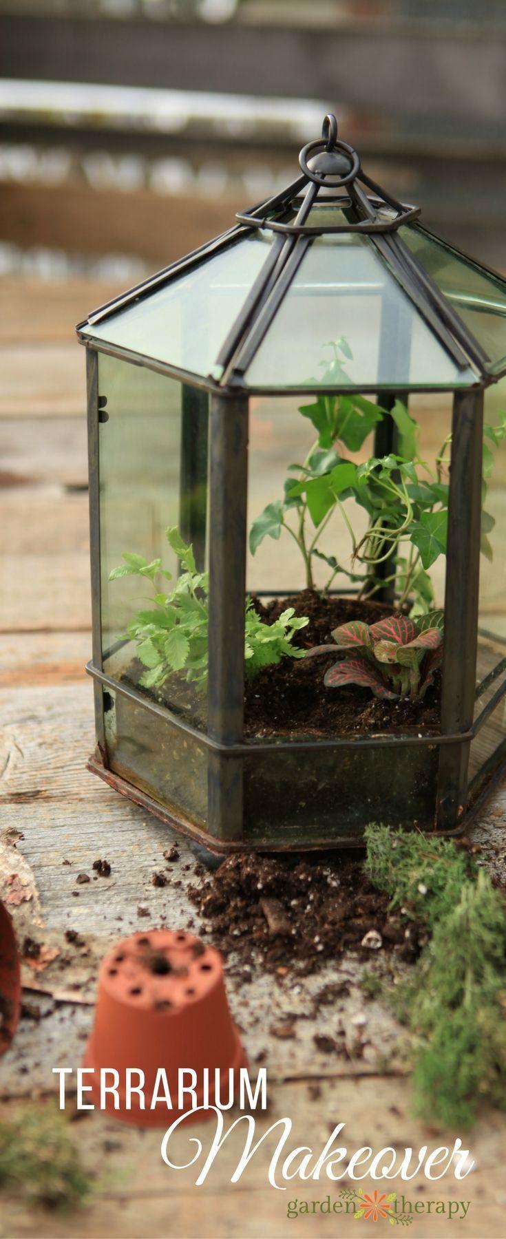 die besten 25+ mini gewächshaus ideen auf pinterest, Gartengerate ideen