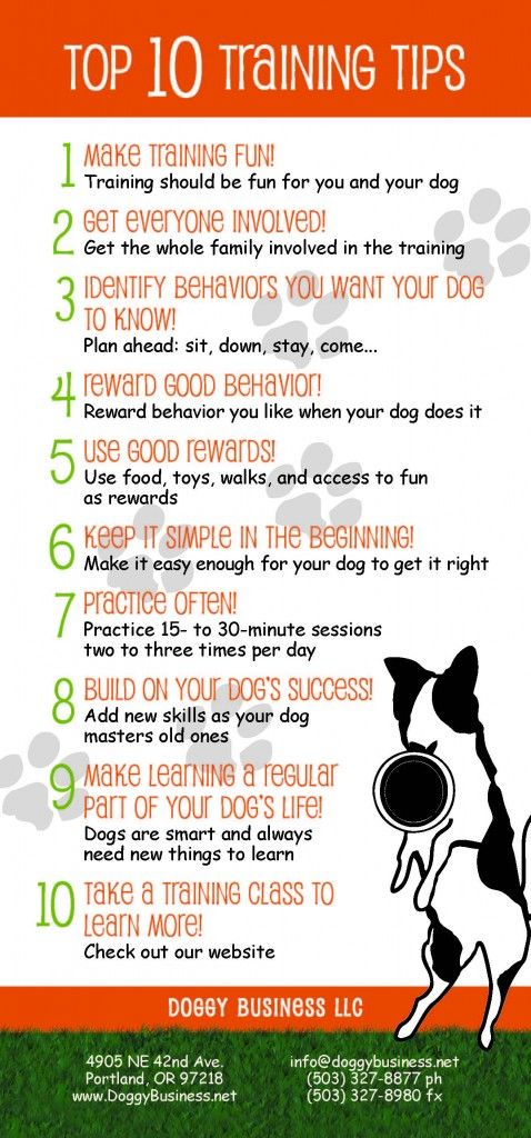 Top 10 Training Tips!   Hello. You were recommended to us by friends at the Fernhill Dog Park. Our 18-month old female boxer Moxie is a great dog who we took had two puppy kindergarten classes as a puppy.