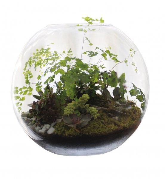 Idée cadeau : un terrarium - Cosmopolitan.fr