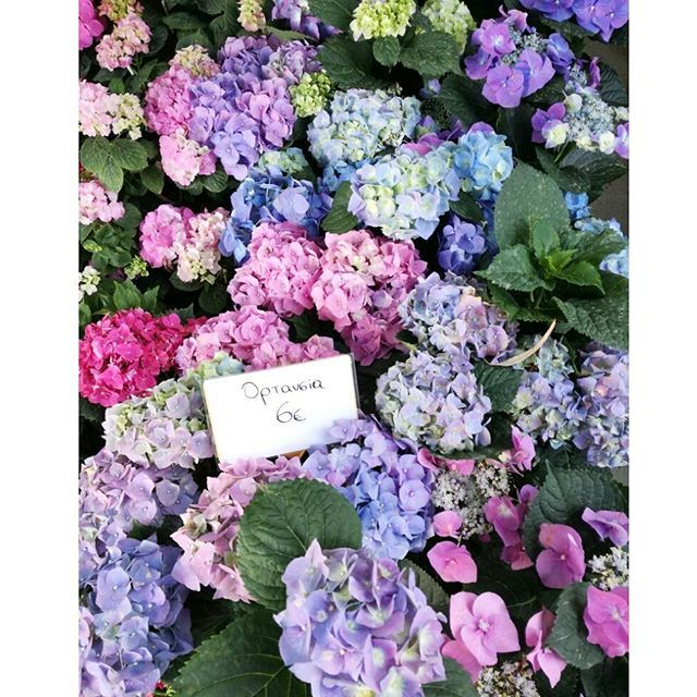 Good morning B e a u t i e s 🌺  #Saturday #May #spring #moodoftheday #instamood #happy #weekend #interiorstyling #homedecor #home #hydrangea #flower #instabeauty #instafashion #fashioninspo #fashionista #stylish #trend #beautiful #fashionpost #instamood #pink #lilac #purple #styleblogger #instadaily #instagram #bloggerlife #fashionblogger #zkstyle