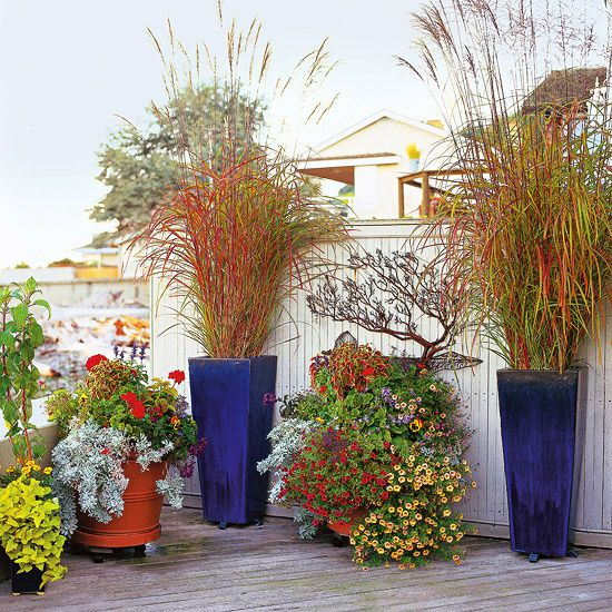 15 ways to use ornamental grasses in your landscape for Ornamental grass in containers for privacy
