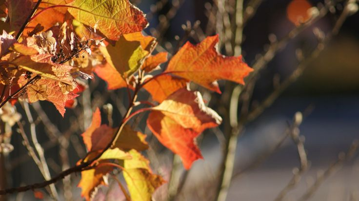 This photo represents the Color principle. The leaves of this tree are colored by three main colors which are they red, orange, and yellow. These colors are Analogous color combination which means that they are next to each other on the color wheel.