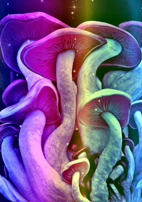 #psychedelic #mushroom #drugs #High #SUPERHIGH