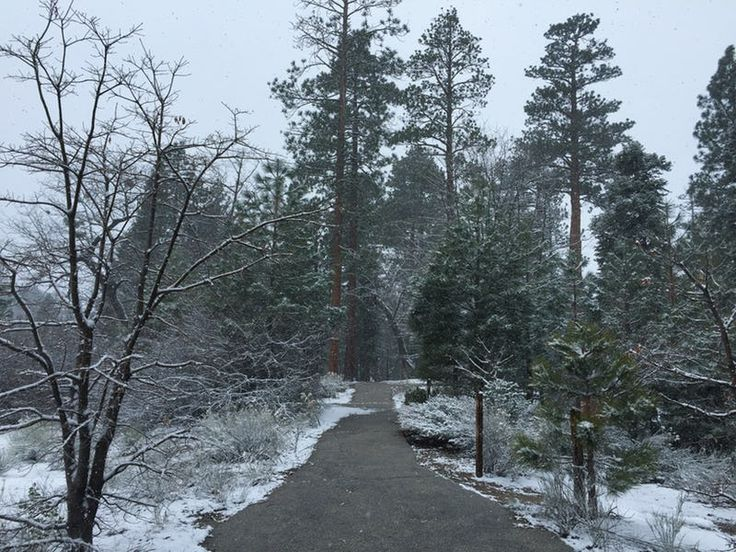 If you want to experience winter, beauty and solitude in SoCal look no further than Jenks Lake. - helpful blog about jenks lake