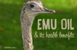 The emu bird is a flightless bird originating in Australia that produces oil. Emu oil is extracted from the thick pad of fat on its back and is processed into different grades of oil. It can be used topically or internally. What are some of its uses and how can it benefit you?